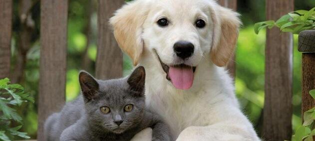 Evcil Dostlarınıza Güvenle Sarılın