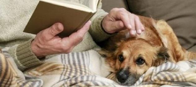 Evcil Hayvan Beslemek, Kalp ve Damar Hastalıkları Riskini Azaltıyor