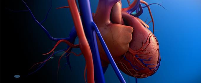 Kalp Kapakçıklarınızda Sorun Çıkabilir - II
